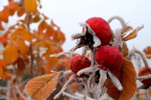 Garten winterfit machen: so geht's