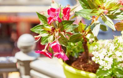 Balkon gestalten mit Blumen