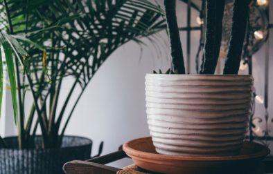 Pflanzen-Titelbild-Unsplash