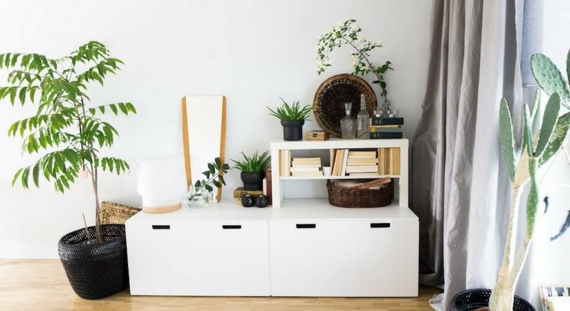 ich zeige dir wieus gestalte deine rume glcklich und erfolgreich und du wirst es selbst with pflanzen fr schattige rume - Wohnzimmer Pflanzen Schattig