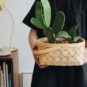 kaktus-trend