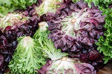 Gartensalat im Juni - Kopfsalat pflanzen