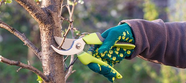 Gartenarbeiten im Dezember - Obstbaumschnitt