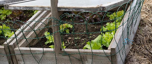 Gartenarbeiten im Februar - Frühbeet