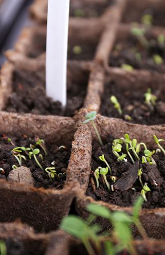 Gartenarbeiten im Januar - Samen aussäen