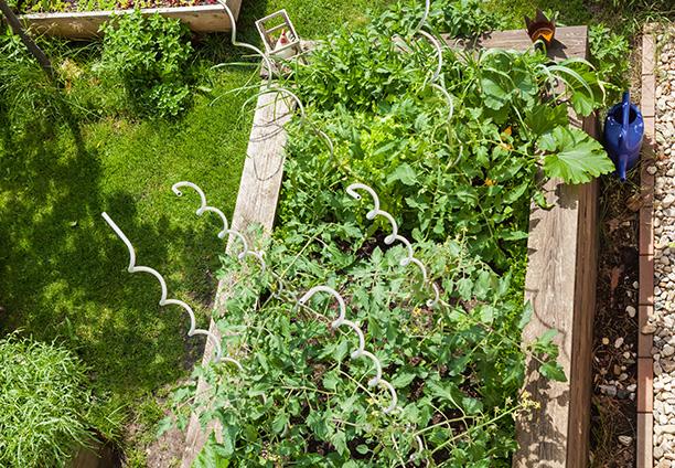 Gartenarbeiten im März - Knoblauch pflanzen