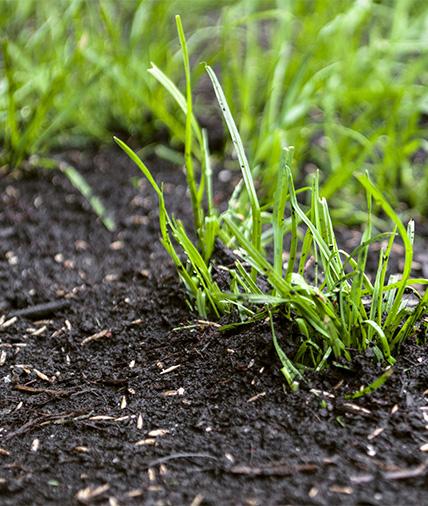 Gartenarbeiten im Mai - Rasen säen