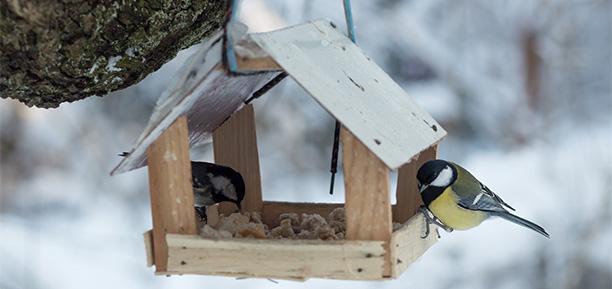 Gartenarbeiten im Oktober - Vogelhaus bauen