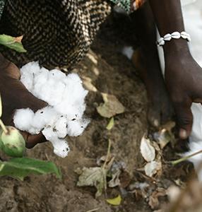 FSC und Cotton made in Africa